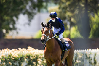 Glen Boss on Home Affairs after a track gallop between races at Rosehill.