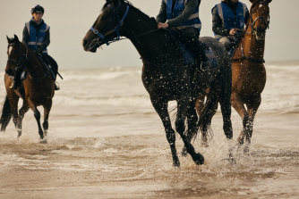 Horses, including 2019 Melbourne Cup winner Vow and Declare (at right), training at the beach near Danny O'Brien's property outside Barwon Heads, near Geelong.