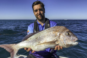 Proof is in the eating: the snapper seem to like it.