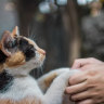Furball farewells: the overwhelming grief of losing a pet