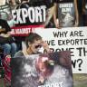 Report proves cruel animal export trade has no future
