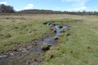 A riverbed and field damaged by brumbies in Tantangera, NSW, just south of the ACT.