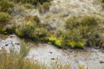A healthy riverbed in Tantangera, NSW where feral horses are estimated to be in their thousands.