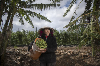 Thou Chheav sells freshly picked beans at her western Sydney farm, and supplies seasonal produce to the rest of Sydney.