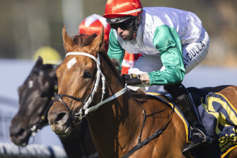 Emerging stayer Wicklow faces his biggest test at Rosehill on Saturday.