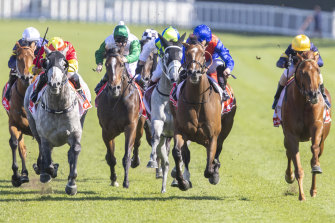 Paths Of Glory (left) wins the JRA Plate at Randwick on April 24. The grey is the selection for the Wagga Cup.