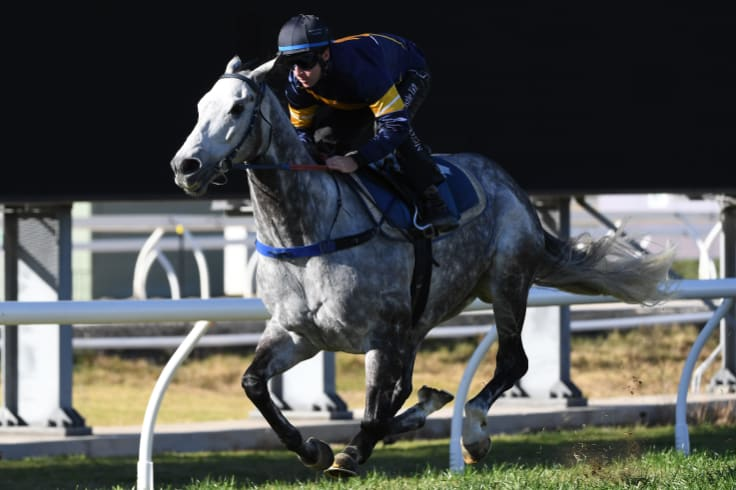 Flying Grey: Chautauqua finished his barrier trial after once again refusing to jump with the field.