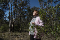 """Sue Gay, a local resident and wildlife campaigner, said she was """"very pleased"""" about plans to create a koala reserve that will eventually become a national park."""