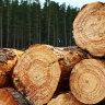 More pain for home owners, builders as timber prices climb higher