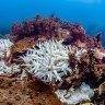 Great Barrier Reef showed modest recovery before latest bleaching, survey finds