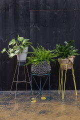 Some indoor plants, such as ferns, benefit from an occasional misting during the cooler months.