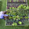 One backyard at a time: how Perth gardeners can lead the planet back to health