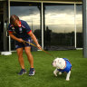 Bulldogs ready to handle financial 'bleeding': Beveridge