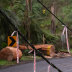 Trees and power lines down in Sassafras.