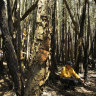 Fire near Port Macquarie extinguished after 210 days