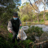 Paul Prentice picks up rubbish along the banks of Merri Creek.