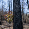 Two-thirds of 'harvestable' native forests damaged by summer bushfires