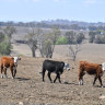 Clothes pegs full of unpaid bills: How the drought is costing business