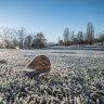 Richard Glover: Frozen stiff in an apparently hot land