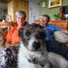 'Let the games begin': All out war between pet owners and strata bosses