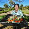 Seedlings selling out as food fears drive rise of backyard vegie plots