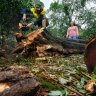 Gold in them hills? Rush on to harvest fallen Dandenongs trees