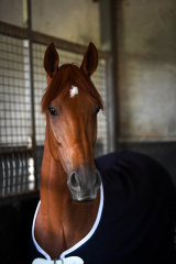 Last year's Melbourne Cup winner Vow And Declare.