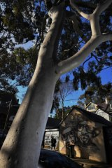Residents of Sydney's inner west face fewer restrictions to cutting trees down on their own properties, under a new council policy.