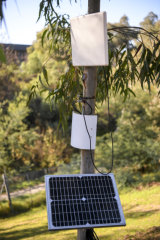 The 'sap sensors' on a tree at CERES Environment Park.