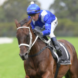 Normal routine: Winx with Kerrin McEvoy in the saddle during her gallop on Saturday