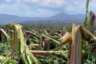 A banana plantation levelled by Yasi in Tully, north Queensland, in 2011.