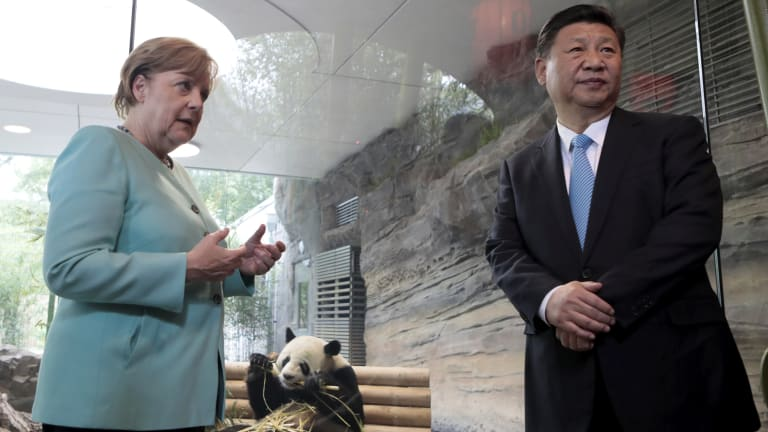 Eyeing China: German Chancellor Angela Merkel and Chinese President Xi Jinping, right, meet panda bears at the Zoo in Berlin last year.