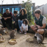 Wildlife Retreat reopens as Taronga roars back to life after COVID-19