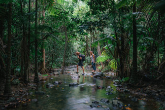 The world's oldest tropical rainforest, the Daintree.