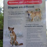 Warnings signs are placed on Fraser Island for visitors to be aware of any danger.