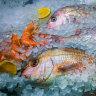 Microplastics not a seafood danger, researchers claim