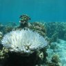 Record February heat pushes Reef corals closer to big bleaching event