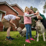 'They're our sheep': City schoolkids learn about life on the lamb