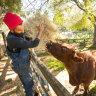 Million-dollar lifeline puts children's farm 'in a wonderful position'