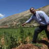 Lebanon's cannabis heartland hopes for legalisation
