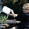 Marika Nabung empties her compost bin into the large compost at a community garden in Rose Bay,