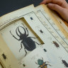 State Library's beetle mystery a real page turner
