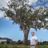 Councils banding together to save historic river red gums from the axe