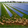 Grid strife threatens Australia's green power switch, investors say