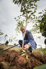 Acting Premier James Merlino plants a tree at the announcement of the tree program.