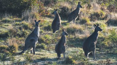 Experts warn global bans on wildlife trade could end up applying to the kangaroo industry.