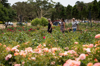 The rose garden at Centennial Park was planted more than 120 years ago. But if the drought continues, it may be jettisoned.