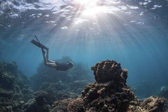 A diver visits Ningaloo Reef.
