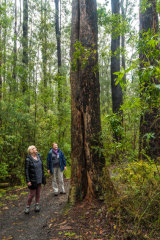 Marg Thomas and Susan Koci of the 'Preserve our Forest group Mirboo North'