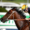 Masked Crusader the cream of the crop in Scone Guineas